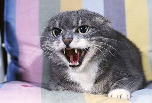 gatto spiriti presenze infestazioni