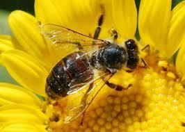 ape insetto superstizioni riti magici