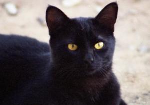gatto nero superstizioni sfortuna