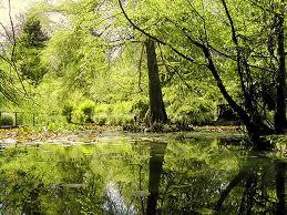 lago orto botanico consulente armonico Molly